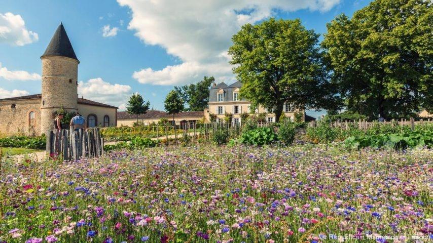 Photo avec en 1er plan un champs de fleurs et en arrière plan un château