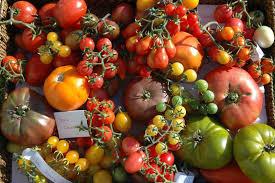 Photos  de tomates diverses et variées