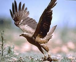 Gros plan sur un aigle qui prend son envol