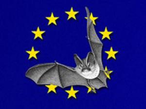Photo chauve souris sur fond de drapeau Européen