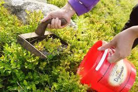 photo en gros plan d'un peigne à ramasser les myrtilles et un seau rouge
